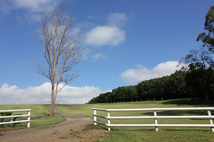 This was a hand held shot using a canon 550d. Taken at 9am I have focused on the rule of thirds with the white fence and the tree. ISO 100 aperture f10 and shutter speed was 1/250.