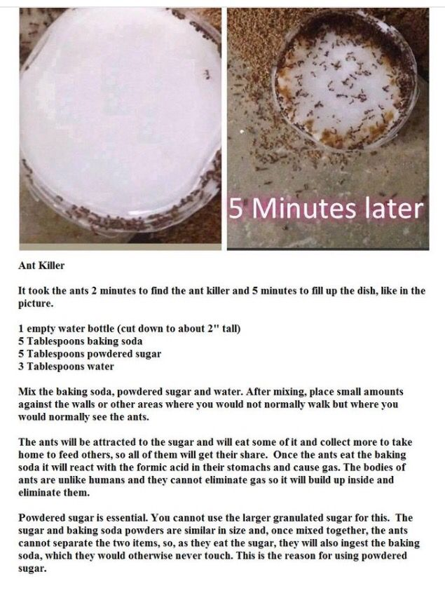 DIY how to kill ants