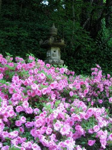 88 Best Portland Japanese Rose Garden Images On Pinterest