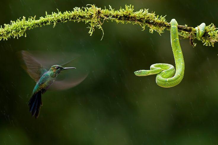 Ausstellung: Kolibri