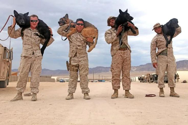 Here are Military working dog handlers with the 1st Law Enforcement Battalion, I Marine Expeditionary Force   (From left to right: Cpl. John Brady, with his patrol explosive detector dog, Tesa. Cpl. Fidel Rodriguez, with his combat tracker dog, Aron. Cpl. Dwight Jackson, with his patrol explosive detector dog, Hugo. Lance Cpl. Isaiah White, with his specialized search dog, Moxie).    STAY SAFE and THANK YOU for your service!