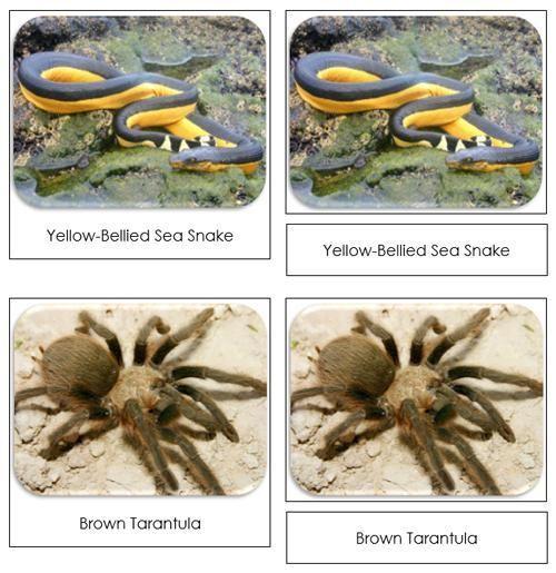 Venomous Creatures Safari Toob Cards - printable cards by Montessori Print Shop