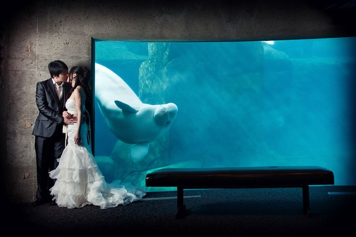 Nothing says west coast like a Vancouver Aquarium wedding. I suggested to Beijing and Chris that we should go to a unique wedding location for their portrait session that involves the Vancouver special: Beluga whales…