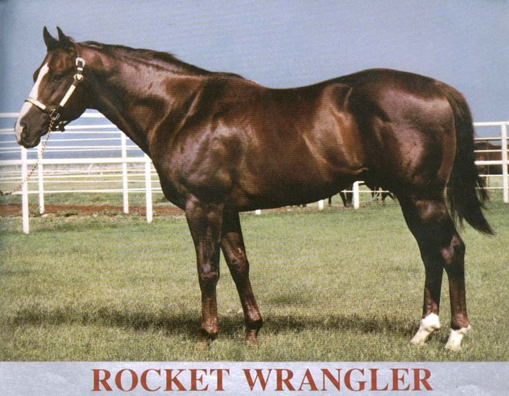 Rocket Wrangler(1968)Rocket Bar- Go Galla Go By Go Man Go. 23 Starts 10 Wins 4 Seconds 4 Thirds. $252,167. Won All American Futurity, Rainbow Futurity. 1970 World Champion 2 YO Colt. Sire Of Dash For Cash.