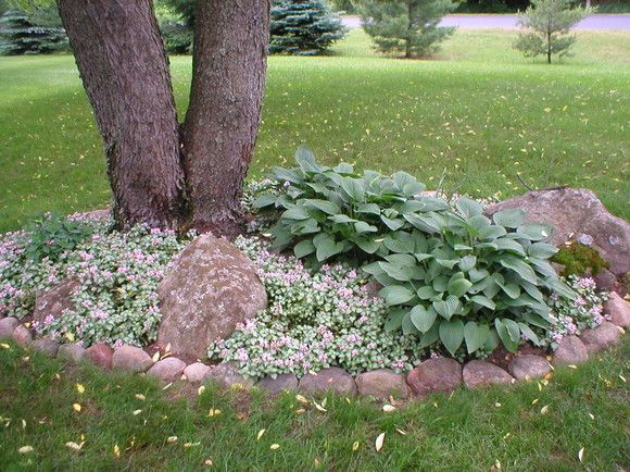 hosta garden for around the tree in the front yard - Flower Garden Ideas Around Tree