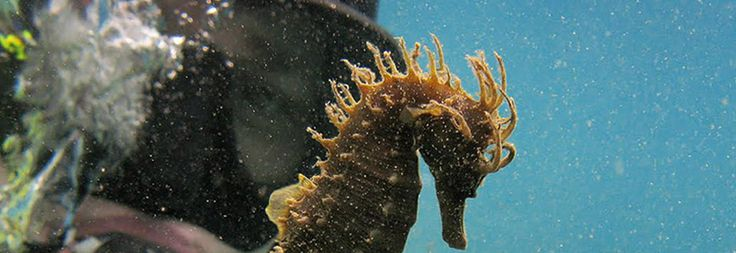 #PADI Discover Local #Diving Kassandra #Halkidiki (certified #diver)