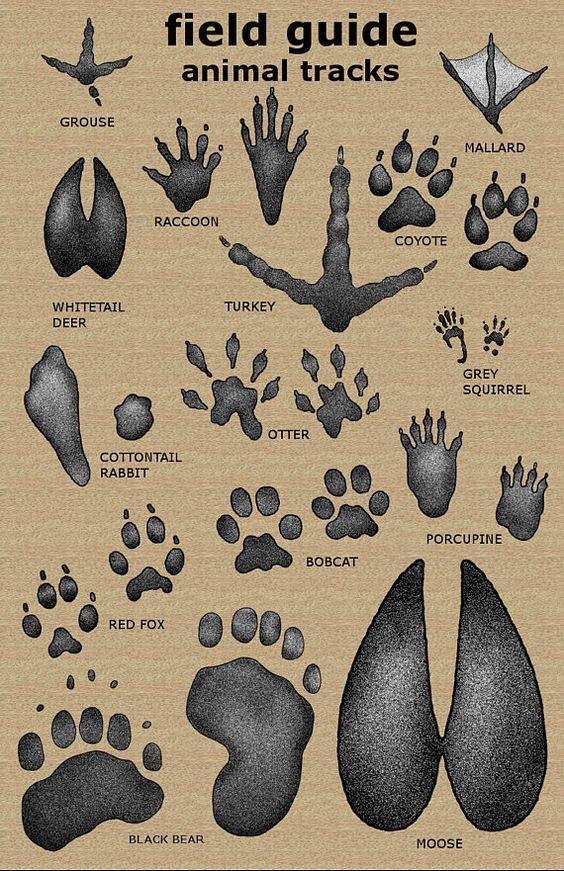 Animal Tracks - The Animal Tracks Guide