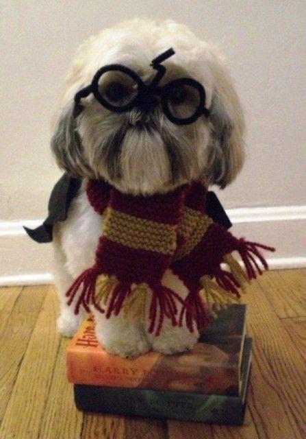 Déguisements d'halloween pour chiens hahaha il y en a des vraiment drôles  #HarryPotter :)