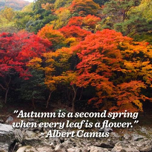 Albert Camus Quote About Autumn