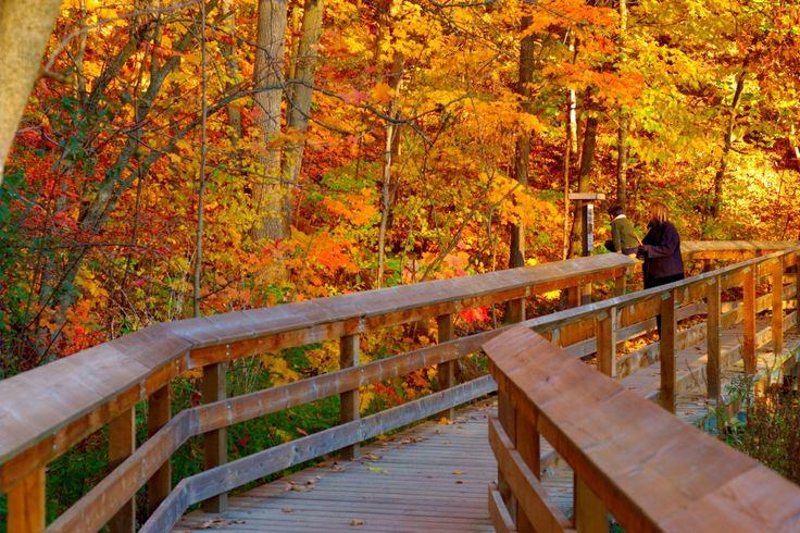 Riverwood Park, Mississauga, Ontario