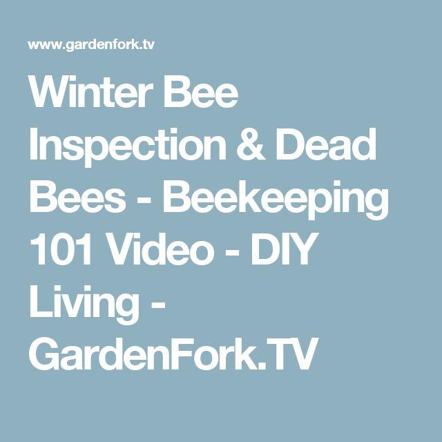 Winter Bee Inspection & Dead Bees - Beekeeping 101 Video - DIY Living - GardenFork.TV