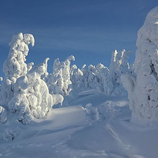 Удивительные белоснежные великаны стоят, склонив головы, высоко в горах. Это место, где попадаешь в страну чудес и не хочется возвращаться назад - в реальность.  #фотоизабеллазубкова #лес #австрия #зима #лыжи #горы #природа #пейзаж #путешествия #landscape #nature #travel #scenery #beautiful #view #scenic #tourism #natural #environment #land #forest #mountain #winter #natgeo #izabellazip #фотограф