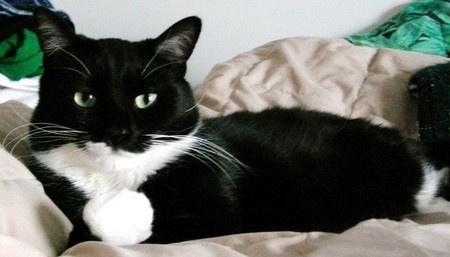 Tuxedo cat... floridauhy