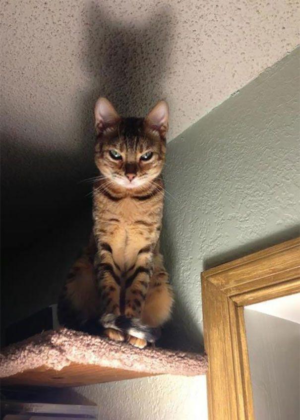 地獄からの使者みたいな猫画像wwwwwwww