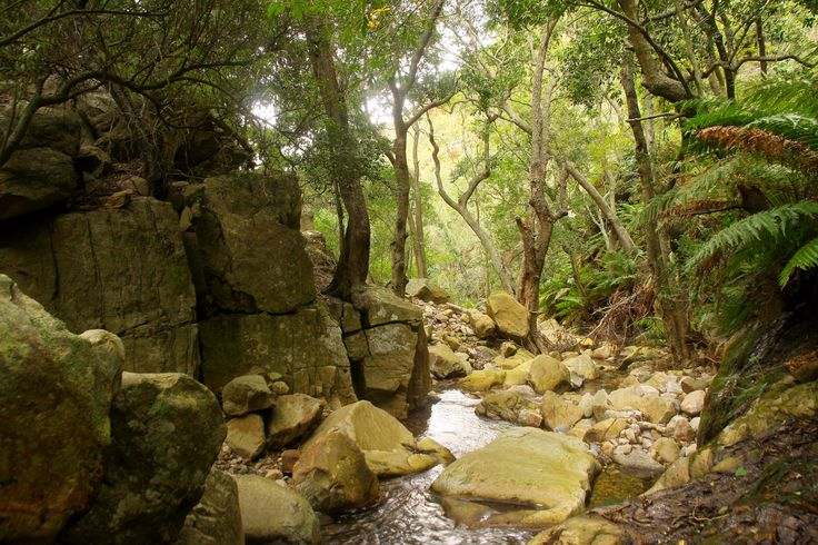 Mountain Streams at Orange Grove Farm