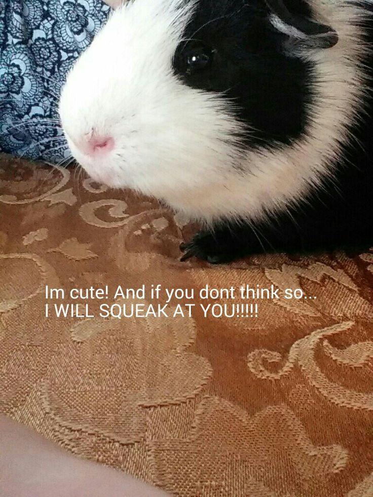My cute guinea pig named Mazi
