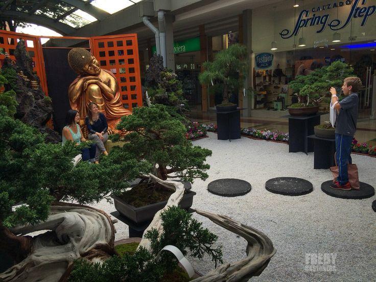 Centro Comercial Dan Diego - Medellin - Exposición Bonsai 2015