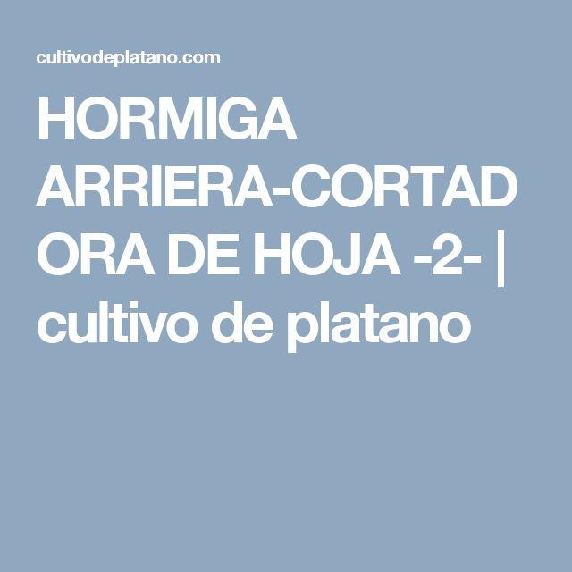 HORMIGA ARRIERA-CORTADORA DE HOJA -2-   cultivo de platano