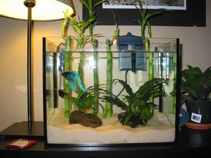 Best 25 cheap fish tanks ideas on pinterest tank tank for Cheap betta fish