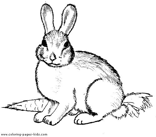 Lovely Bunny Coloring Book Page Cute