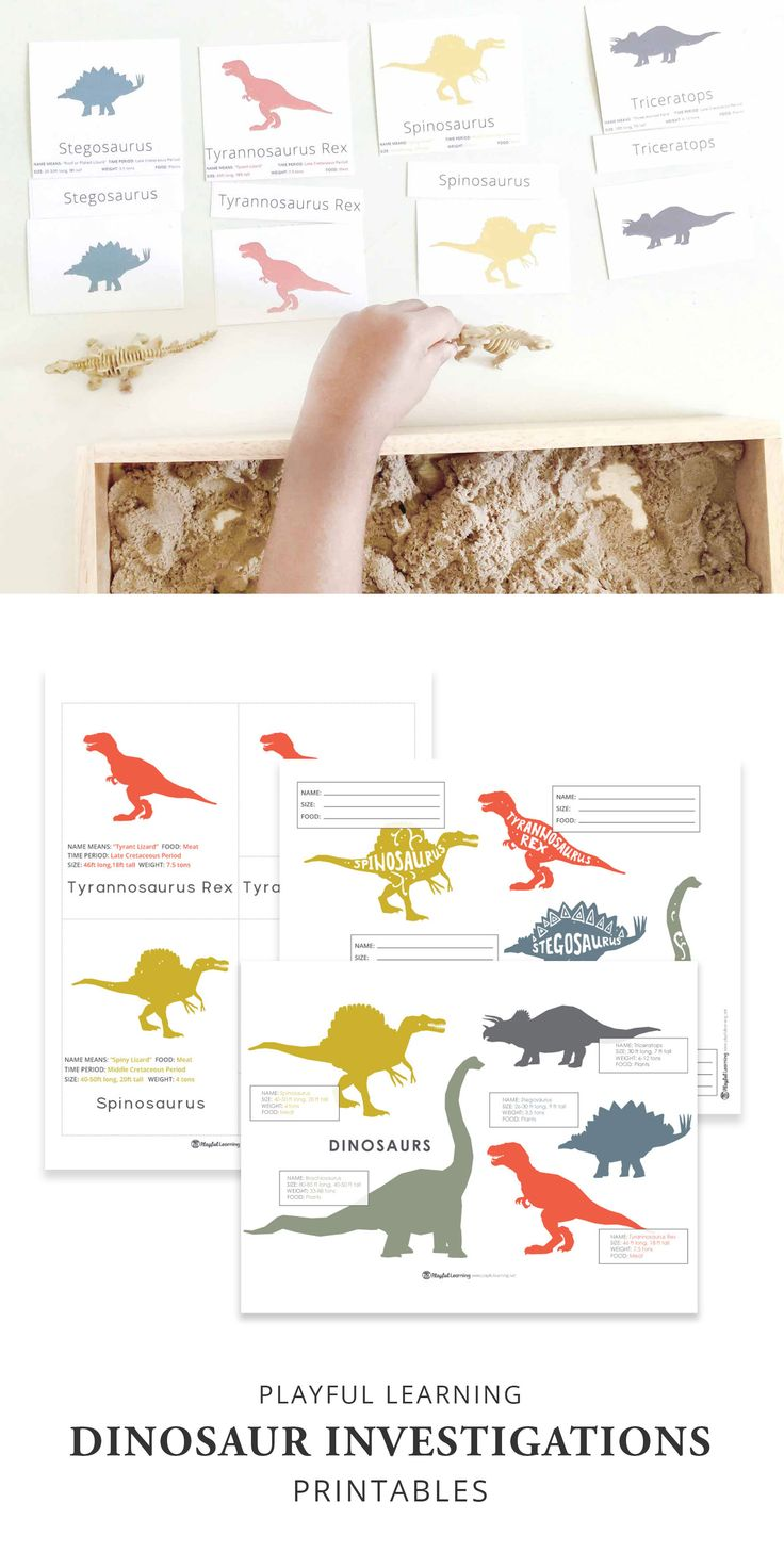 Check out our engaging dinosaur printables! These are the perfect compliment to preschool dinosaur investigations and activities...
