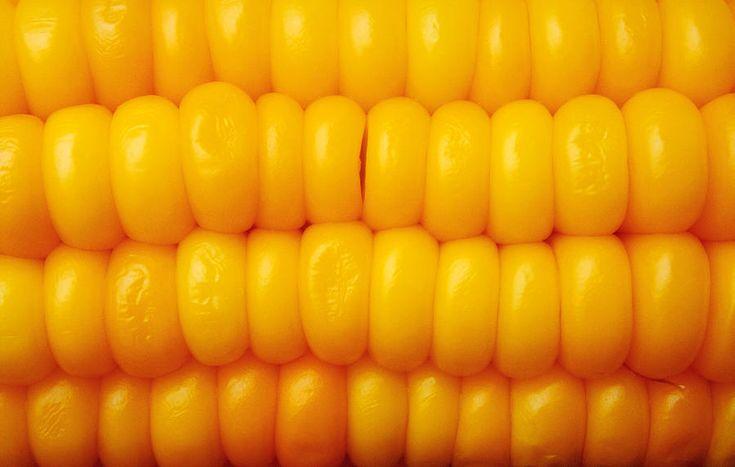 Corn Photograph - Yellow Sweet Corn Grains  by Emir Dayan Mende