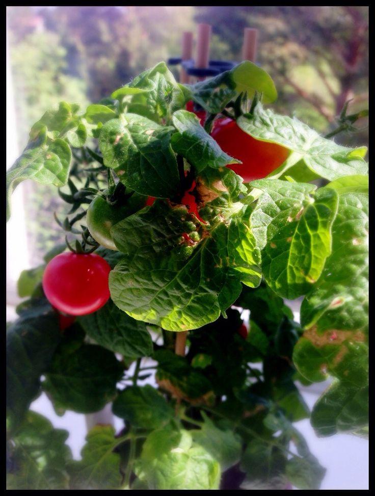Odla grönsaker med barnen