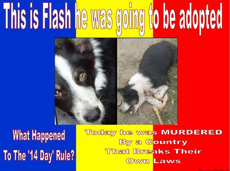 """FROM ROMANIA: the new law has been approved. Euthanasia has been re-introduced after 14 days.The dogs are taken to a public shelters,but most of the dogs go """"missing"""" on the way there? This how they euthanize the animals :("""