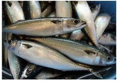 【片瀬漁港 鮮魚直売所】江の島産の鮮魚の直売所。江の島沖の定置網からその日水揚げされた魚なので、鮮度バツグン。毎月第1日曜日には市内産の採れたて野菜も販売する朝市も開催。営業日:月~金、日曜日(毎月29日を除く)営業時間:9:00~12:00(売り切れ次第終了)