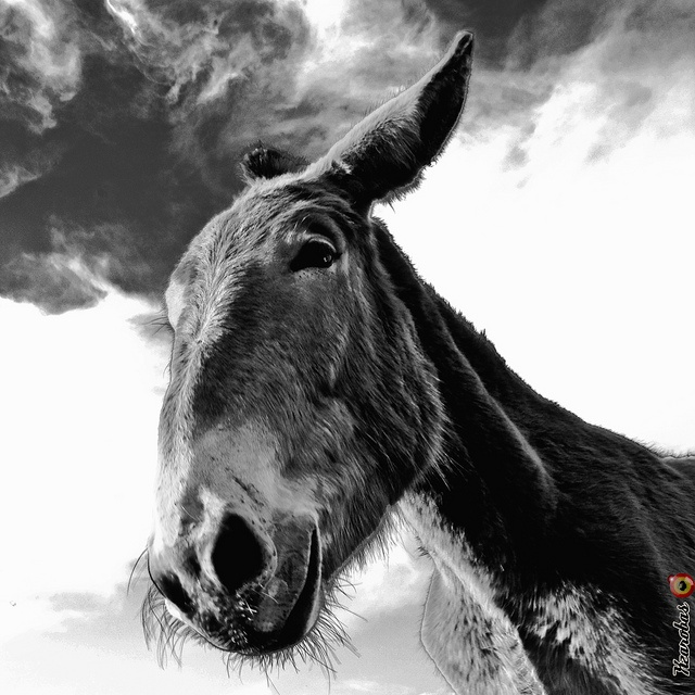 In Their Eyes Were Watching God, what animals show up at the mule's funeral?