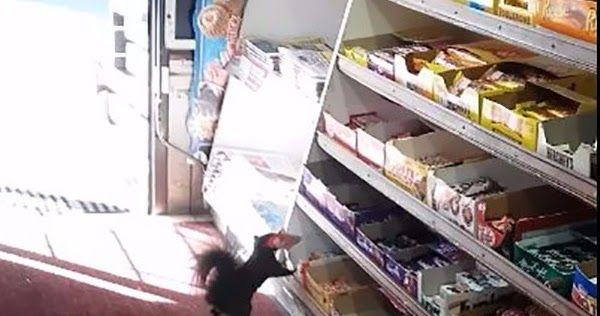 Σκίουρος πιάστηκε επ' αυτοφώρω να κλέβει σοκολάτες! Video
