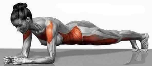 Tonicité musculaire du tronc, le gainage ventral Pour cet exercice-test de tonicité musculaire du tronc il faut être en appui sur les avant-bras et la pointe des orteils, le tronc horizontal, et essayer de tenir le plus longtemps possible