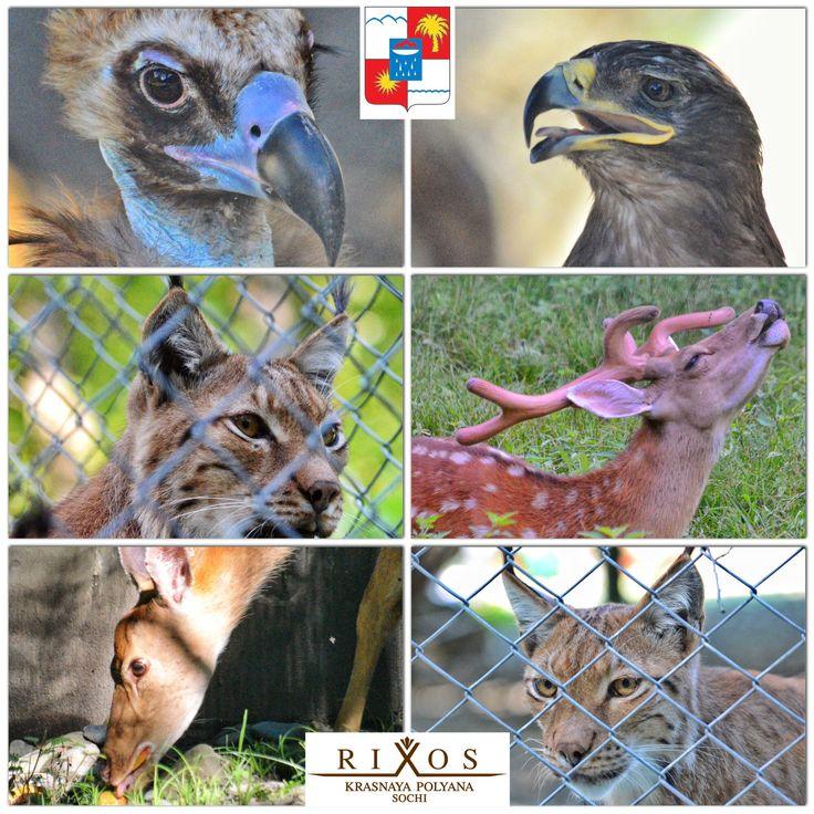 Laura Zoo