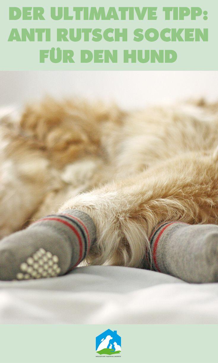 Anti Rutsch Socken für den Hunde - die Lösung unserer Probleme! Unser Hund kann wieder prima zuhause auf dem Laminat laufen, ohne wegzurutschen. Unser Erfahrungsbericht - jetzt im Haustier Notfallkarte Hunde Blog