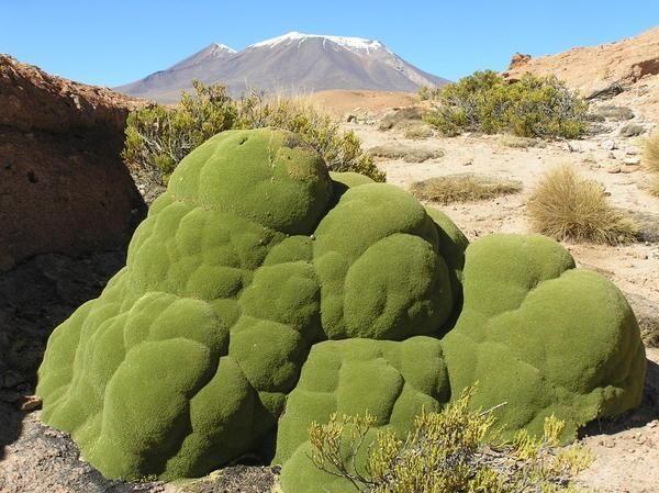 143 best living desert images on pinterest animales