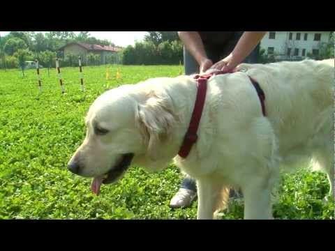 YouTube - Gestione del cane al guinzaglio.flv - YouTube