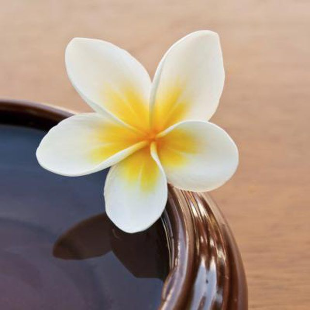 The Meaning Of The Frangipani Flower Frangipani Flowers Plumeria Flowers