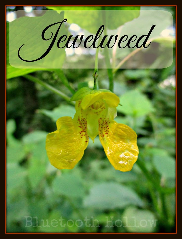 12 best wildflowers of mississippi images on pinterest