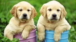 Que Numero Jugar En La Loteria Si Sueño Con Perros o Perritos