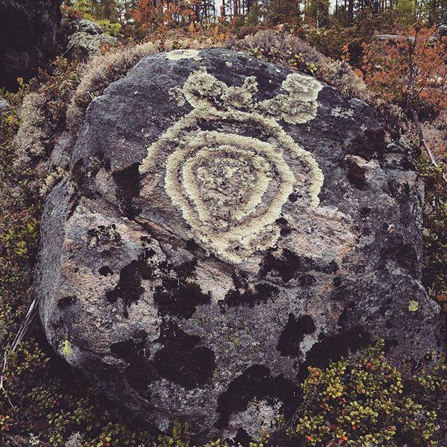 Archaeology Finland (@kmoarchaeology) | You know it's time to go home when you start seeing shapes on boulders. ;-D #bear #lichen #rock #boulder #survey #work #culturalheritage #archaeology #forest #karhu #jäkälä #kivi #lohkare #inventointi #työ #arkeologia #kulttuuriperintö #metsä | Intagme - The Best Instagram Widget