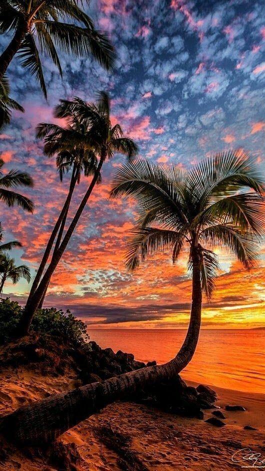 Explore the Cyber Coast at FtPrintMedia.com   #surf #scuba #adventure