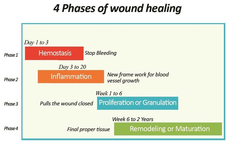 4 phases wound healing