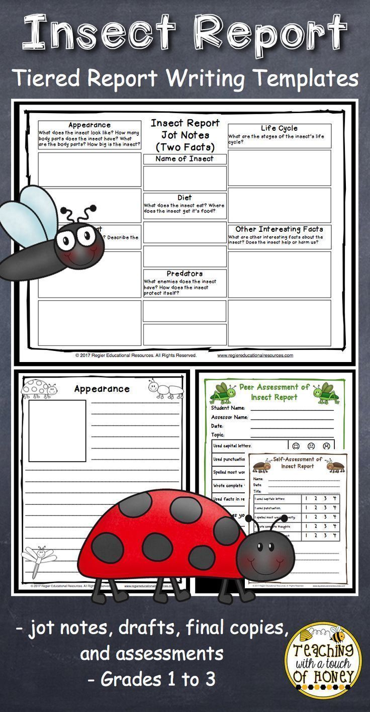 Insect reports are fun, informative writing activities for kids! Provide students in first grade, 2nd grade, and 3rd grade with the differentiated insect report templates. This package of printables provides a variety of writing templates that students can use as they develop their informational writing skills. These templates support students as they work through the writing process from making jot notes to creating their drafts and final copies. #insectreport #teachingwithatouchofhoney