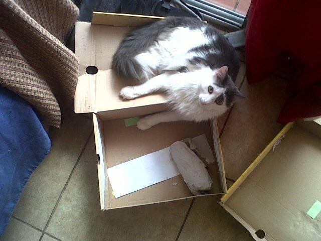 If the shoebox fits!