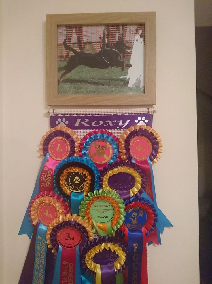 Photo Frame Rosette Display Holder idea for your Rosettes display
