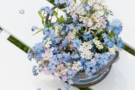 https://www.google.pl/search?q=niezapominajka kwiat