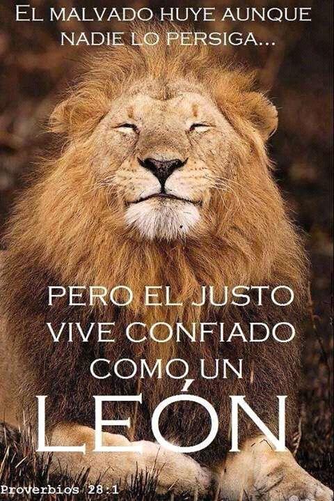 El malvado huye aunque nadie lo persiga… Pero el justo vive confiado como un león. Prov 28.1