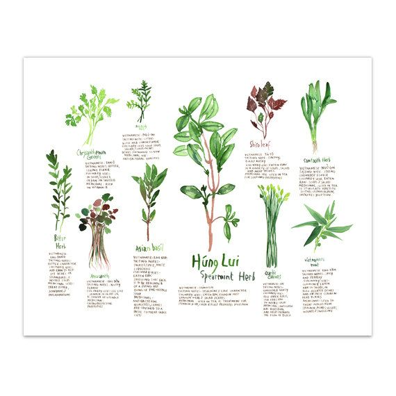 Good Botanical Illustration Vietnamese Medicinal от Lucileskitchen