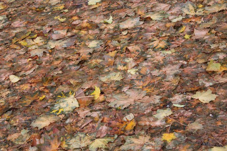 Kouzelný podzim.