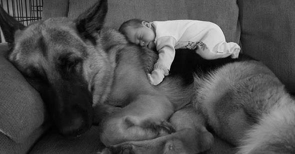 22 Bambini Piccoli Insieme Ai Loro Cani Enormi